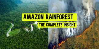 amazon rainforest casestudy