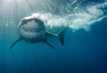Interesting Bull Shark Facts that will blow your mind