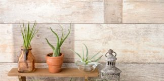 Air Plants Care and Benefits